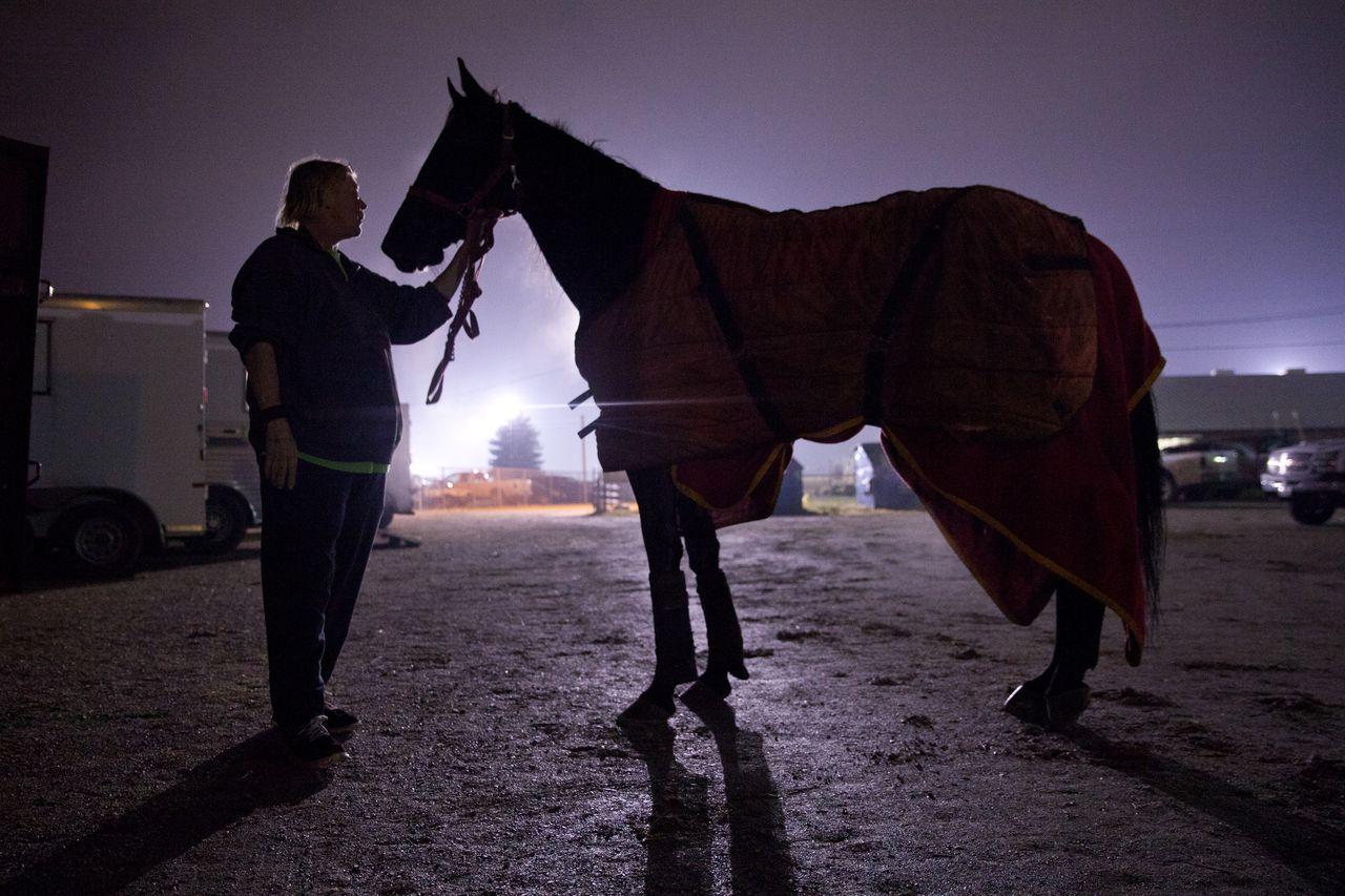 Der Staat unter Quarantäne NJ Eigentum nach Fällen von Herpes bei Pferden