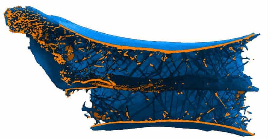 Schnittscan des Flugsaurierknochens mit stäbchenförmigen Strukturen, die in einer Helix um ein zentrales Rohr innerhalb des Wirbels angeordnet sind